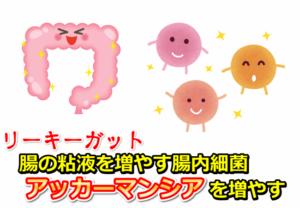 【リーキーガット】腸の粘液を増やす腸内細菌アッカーマンシア